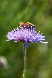 Insekt på blomst