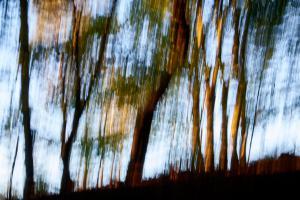 Træer som Illugrafier - FUJIFILM X-T1