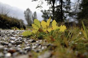 Efterårs bebuder