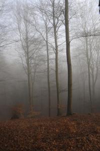 Tåge i skoven