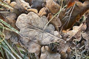 Vinter blade