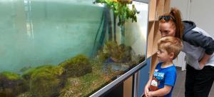 Stort akvarie