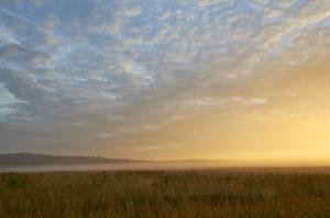 Morgentåge