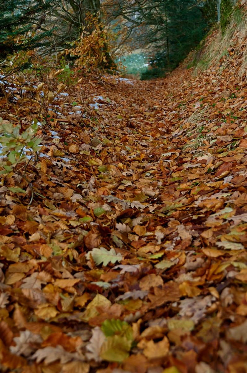 Skovbunden er fuld af blade