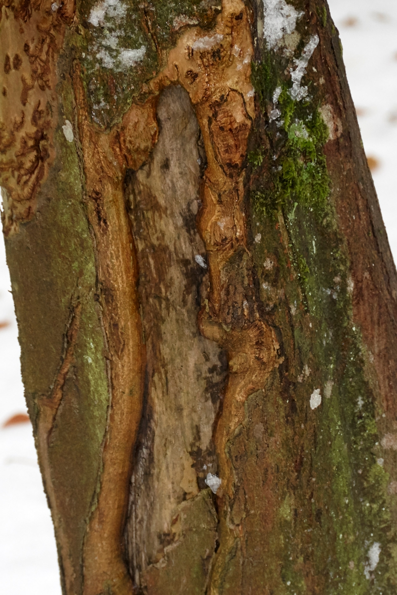 Ansigter og figurer på træ
