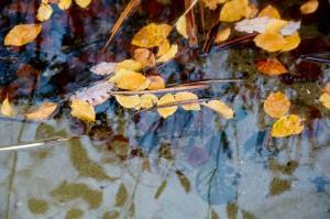 Blade på overfladen i Julsø
