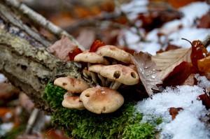 Svampe i skovbunden