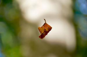 Svævende blad