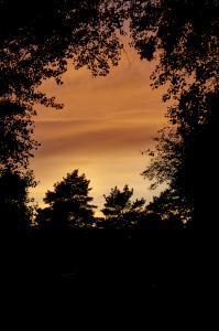 Kig til solnedgang fra skoven