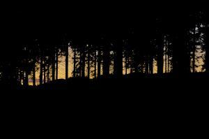 Nat i skoven