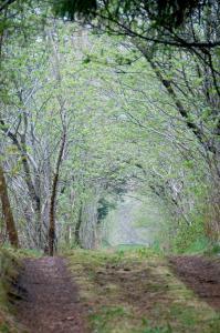 Tunnel i skoven