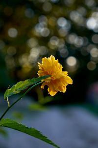 Blomst på vejen, smuk tegning i baggrunden - FUJIFILM X-T1