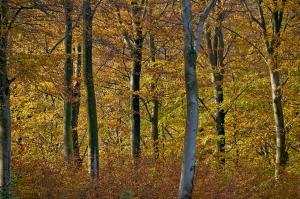 Efterårs skov
