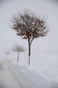 Vintervej