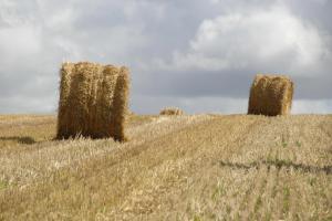 Høsttid