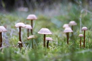 Liv i skovbunden